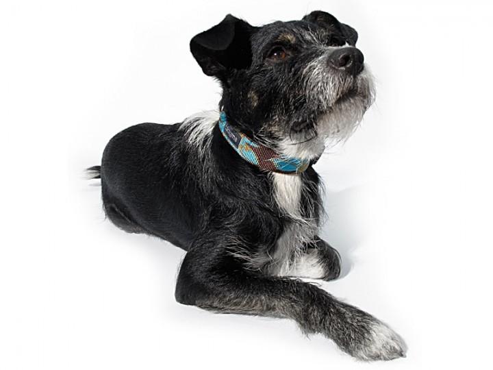 Exklusive Halsbänder von Dogma im Hundeladen München